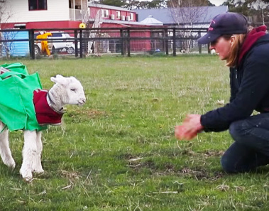 This Little Lamb's Transformation Will Cheer you Up All Day