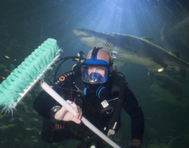 15 Amazing Jobs in The World You Never Knew Existed