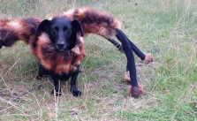 Awesome Dog In Spider Costume Prank