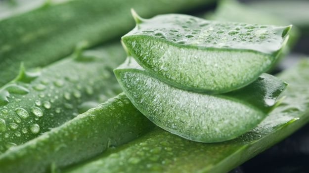 What Aloe Vera Does In Your Body, Why Egyptians Called It The Plant of Immortality (Video)