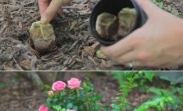 She Planted These Tea Bags In Her Garden, And What Happened Is Beyond Incredible!!!